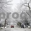 dnews_1203_SnowySycamore4