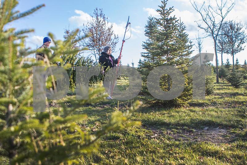 dnews_1204_ChristmasTrees1