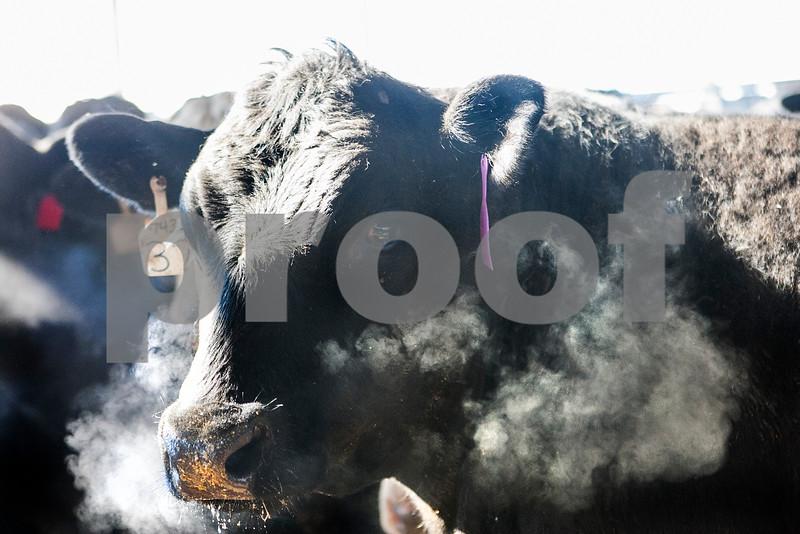 agmag_adv_LivestockPrices2