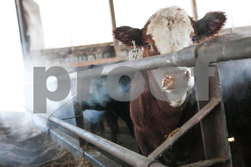agmag_adv_LivestockPrices5