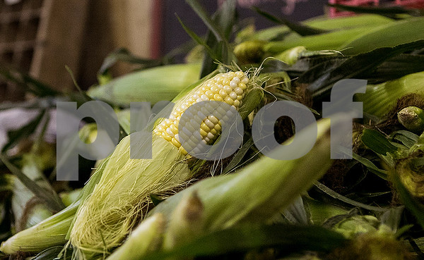 dnews_0727_Sweetcorn1