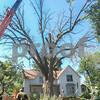 dnews_0731_TreeStandalone2
