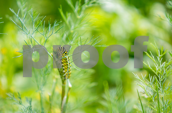 dnews_0620_CaterpillarStandalone2