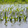 dnews_0617_Flooding4