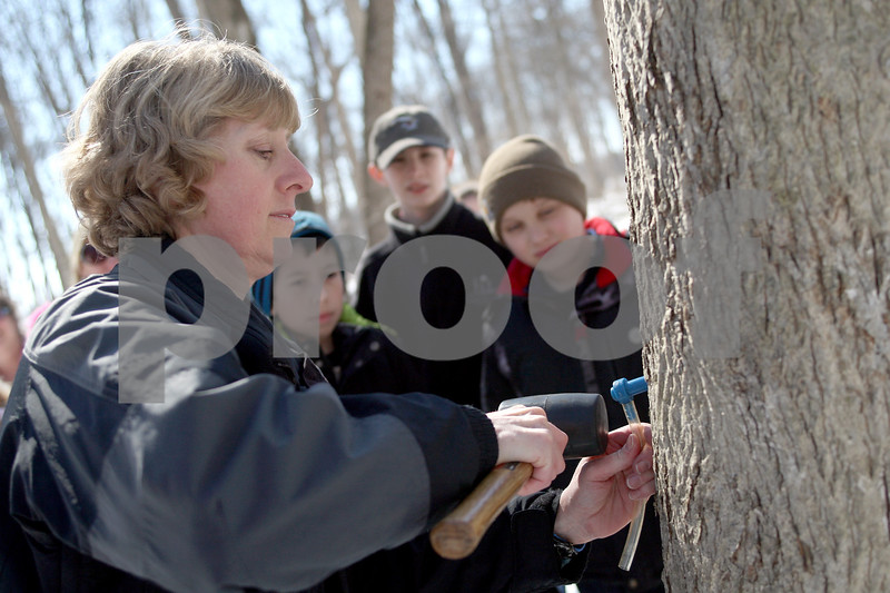Monica Synett - msynett@shawmedia.com<br /> Naturalist Connie Handel, with the University of Illinois Extension, demontrates tapping a tree for sap during the annual Maple Syrup Fest at Russell Woods Forest Preserve in Genoa on Saturday, March 7, 2015. Due to recent temperatures, there was no sap from local trees to boil down to syrup.