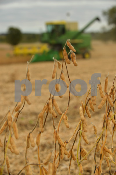 dnews_adv_harvest1.jpg