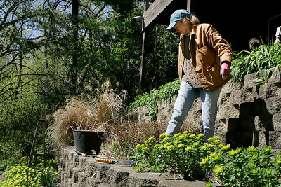 Mike Greene - mgreene@shawmedia.com Brenda Dahlfors (cq) surveys one of her gardens while trimming ornamental grass Thursday, April 5, 2012 at her home in Woodstock. Dahlfors is program coordinator for the Master Gardener program in McHenry County.