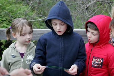 Mike Greene - mgreene@shawmedia.com Joseph Koy, 9, reads a clue aloud while his brother James, 6, and Lily Doyle, 6, peek over his shoulder during a nature treasure hunt held by the McHenry County Conservation District Wednesday, April 18, 2012 in Woodstock.