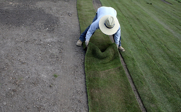 Sandy Bressner - sbressner@shawmedia.com<br /> Alejandro Duran of Thornapple Landscapes applies new sod at Settlers Hill Golf Course in Geneva Wednesday afternoon.