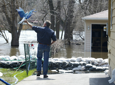 H. Rick Bamman - hbamman@shawmedia.com  Mark Korzcyk and his pet Macaw Macaw, Niki survey the flood waters Sunday morning behind his home on Willow St. in Algonquin.
