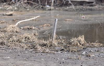 Prentiss Creek restoration falling short