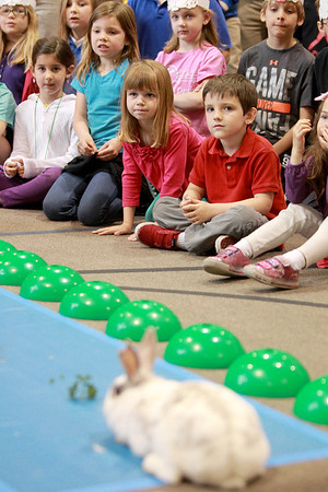 Daisy the rabbit was a bit slow to start as students at Faith Christian School in Geneva watch a race between a rabbit and a tortoise Thursday as part of their lesson on Aesop's fable, The Tortoise and the Hare.