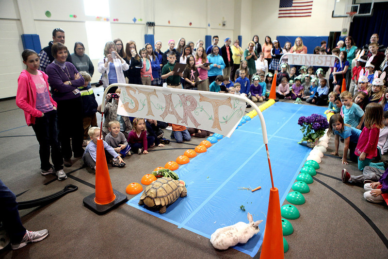 Students at Faith Christian School in Geneva watch a race between Daisy the rabbit and Flash, the tortoise, Thursday as part of their lesson on Aesop's fable, The Tortoise and the Hare.