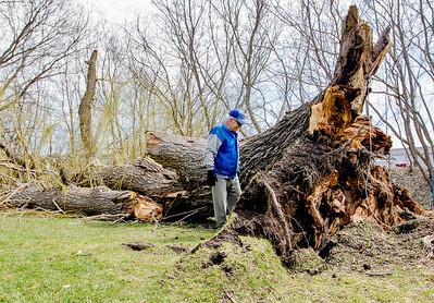 hnews_fri0410_WEB_Tree_Down.jpg