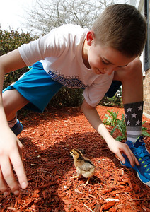 hnews_tue0505_Kids_Ducks_