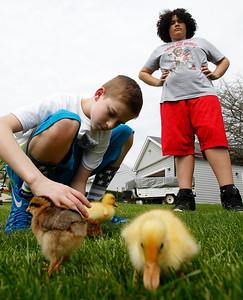 hnews_tue0505_Kids_Ducks_03