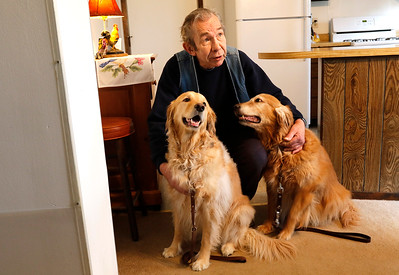 H. Rick Bamman - hbamman@shawmedia.com Ed Hanus huddles with serverce dogs Cassie and Honey-B in their McHenry home. Adria Hanus and Cassie are recovering after being attacked by a pit bull during a walk in late March. Police cited the owner of the pit bull, a 65-year-old man who lives in the same neighborhood.