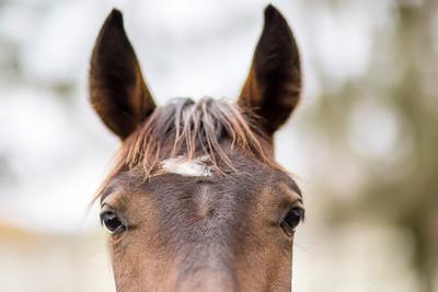 hnews_wed0420_Rescued_horses3.jpg