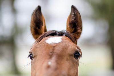 hnews_wed0420_Rescued_horses2.jpg