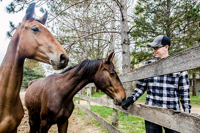 hnews_wed0420_Rescued_horses1.jpg