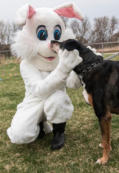 hnews_thur0413_Easter_Egg_01.jpg