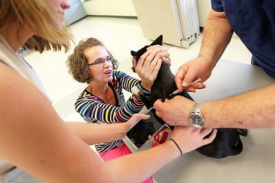 LCJ_0420_Pet_VaccinationC