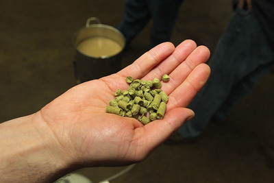 Candace H. Johnson-For Shaw Media Trevor Patric, of Volo, president of the North Urban Brewing Society, holds hops that is used to make beer during the brewing process at Perfect Brewing Supply in Libertyville.(4/3/18)