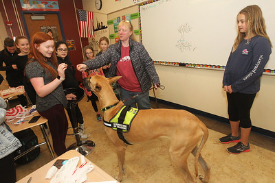 Candace H. Johnson-For Shaw Media Julie Jensen, of Buffalo Grove, (center) with Two Paws Up Dog Training, lets Erika von Kirchbach, 13, of Libertyville give a treat to Leo, a Great Dane and a diabetic alert service dog in training, during a Girl Scout meeting at Oak Grove School in Libertyville. Jensen was teaching the girls in Troops 40151 and 40933 the difference between service dogs for emotional support and therapy dogs to help them get their Animal Helper badge. (4/10/19)