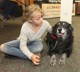 Candace H. Johnson-For Shaw Media Sofie Michaud, 7, of Round Lake visits with Lucy, a thirteen-year-old Border Collie, during the Pet Expo at the Round Lake Area Public Library. Deb Allen, of Ingleside, head of youth services, is the dog's owner. (4/13/19)