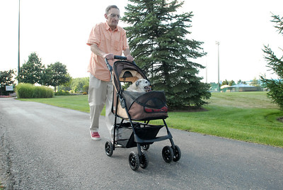 Patrick Skach, of Oak Brook, walks Mighty Mouse, a 12-year-old female Pug, in a dog stroller at Ty Warner Park in Westmont on Friday, Aug. 16, 2013. Mighty Mouse, who was diagnosed with diabetes 2-years ago, lost her sight as a result of the disease. Matthew Piechalak – mpiechalak@shawmedia.com
