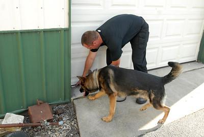 Canine Training in Lemont