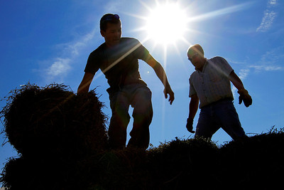 Central Illinois farmers, Dalton Harper of Scottsville, Ill., left, and Rex Evans of Jacksonville, Ill., unload hay for livestock from a truck in preparation for the start of the state fair at the Illinois State Fairgrounds. The Illinois State Fair in Springfield, will  continue through Aug. 19. (AP Photo/Seth Perlman)