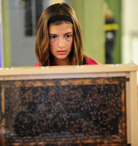 Josh Peckler - Jpeckler@shawmedia.com Kelli Kampert, 12 of Huntley looks at a live beehive display during the McHenry County Fair Wednesday, August 1, 2012.