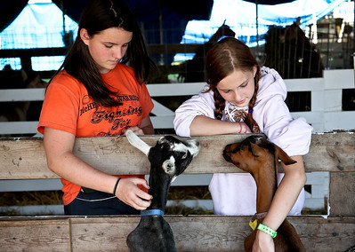 Josh Peckler - Jpeckler@shawmedia.com Erika Vahst, 14 of Mchenry (left) and Alyssa Pedersen, 11 of Crystal Lake pet goats inside the goat barn during the McHenry County Fair Wednesday, August 1, 2012.