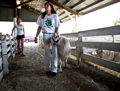 Josh Peckler - Jpeckler@shawmedia.com Abby Green of Garden Prairie walks one of her sheep while friend Brooke Prehn, 13 of Woodstock looks on inside the sheep barn during the McHenry County Fair Wednesday, August 1, 2012.