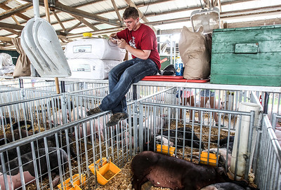 Sarah Nader - snader@shawmedia.com Hebron Helping Hands 4-H member Josh Meier, 15, of Hebron plays on his cell phone while watching over his families pigs during the McHenry County Fair in Woodstock Saturday, August 3, 2013.