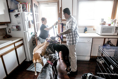 Sarah Nader -  snader@shawmedia.com Amanda Patenaude (left) and her husband, Travis Patenaude, lead their seven Greyhounds, which include four Galgos outside at their Crystal Lake home Monday, August 9, 2013. The Patenaude's started a Galgo rescue and currently have four Galgo's up for adoption.