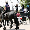 Jeff Krage – For Shaw Media<br /> A horse walk past as Nuclear Sandwich performs during Sunday's Festival of The Horse & Drum at the Kane County Fairgrounds.<br /> St. Charles 8/18/13