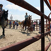 Jeff Krage – For Shaw Media<br /> Nakota horses walk inside a corral during Sunday's Festival of The Horse & Drum at the Kane County Fairgrounds.<br /> St. Charles 8/18/13