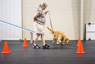 Sarah Nader -  snader@shawmedia.com Debbie Burris of Elgin and her three-year-old Golden Retriever, Kicker, attend a Nose Work class at Northwest Obedience Club in Cary Tuesday, August  26, 2013. Northwest Obedience Club now offers six Nose Work classes for all types of dogs.