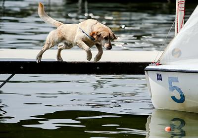 2A_adv_Water_Dog.jpg