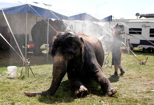 knews_wed_812_ElephantBath2