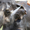 knews_wed_812_ElephantBath1