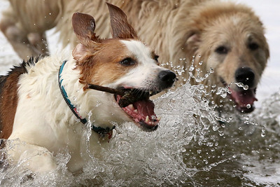 hnews_mon0831_Water_Dogs_