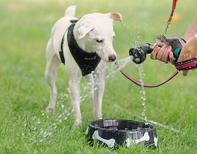Downers Grove Park District dog festival