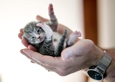 hnews_adv_Cat_Foster_2.jpg