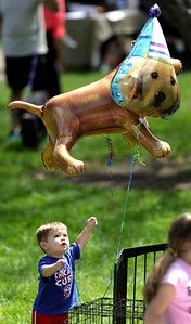 Ty Baartz, of Wonder Lake, reaches for a dog balloon during the second annual Bark-a-Paw-Looza in Woodstock Square on Sunday, Aug 21.  John Konstantaras - For Saw Media