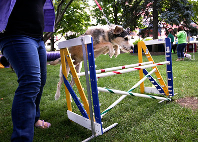 Camryn Boyd, of Woodstock, takes her 2-year-old Aussie Lab Shepard over a jump at the WI-IL Agility Group during the second annual Bark-a-Paw-Looza in Woodstock Square on Sunday, Aug.  21. John Konstantaras - For Saw Media