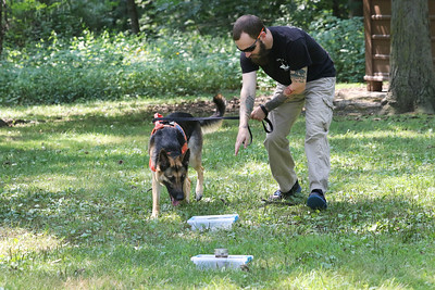 Candace H. Johnson-For Shaw Media Zachary Hammett, of Lake Villa, owner/K-9 handler, works with Freya, a human remains disaster dog, on identifying human remains in a scent box during Disaster Dogs of Illinois training at the Lakewood Forest Preserve in Wauconda. (8/12/18)