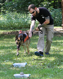 Candace H. Johnson-For Shaw Media Zachary Hammett, of Lake Villa, owner/K-9 handler, works with Freya, a human remains detection dog, on finding human remains in a scent box during Disaster Dogs of Illinois training at the Lakewood Forest Preserve in Wauconda.(8/12/18)